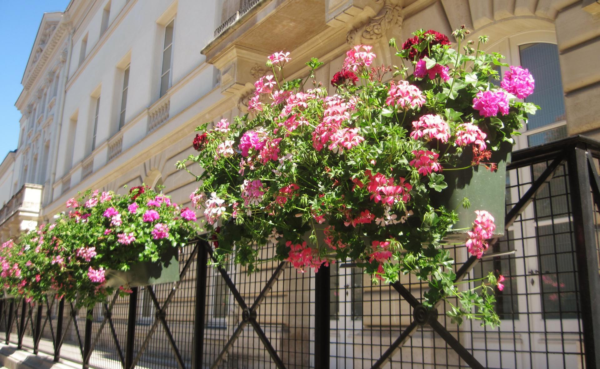 Balconniere fleurie pour les berges