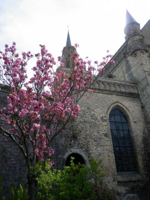 calais-notre-dame-cerisier-a-fleurs.jpg