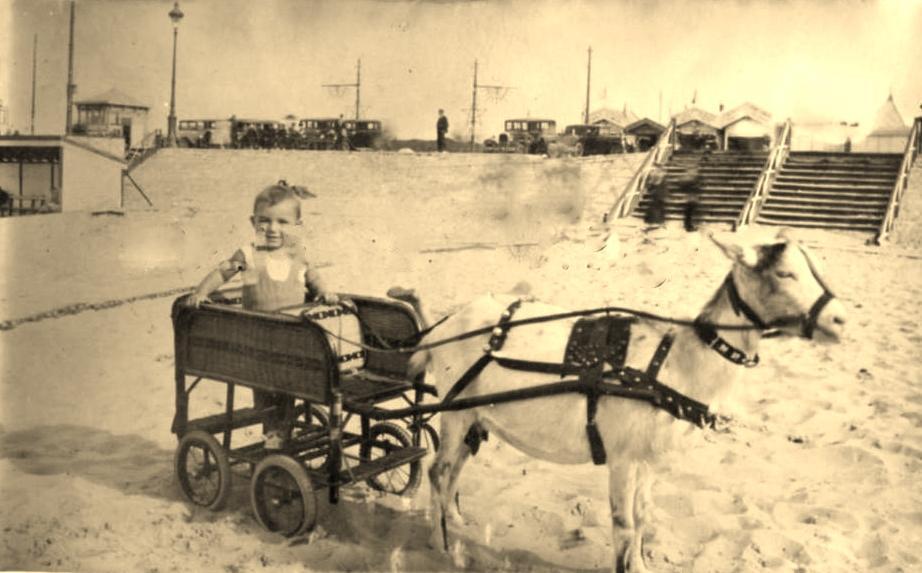 photographie calais un attelage de chèvre en 1933