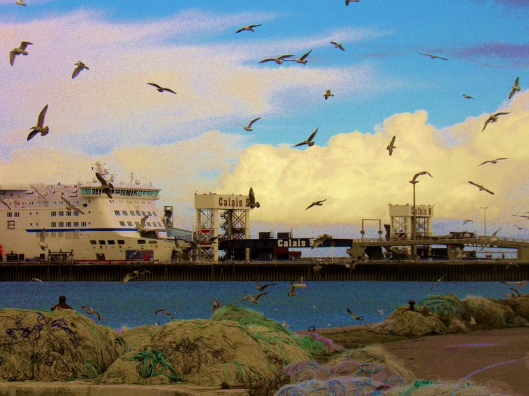 photographie-calais-ferry-mouettes.jpg