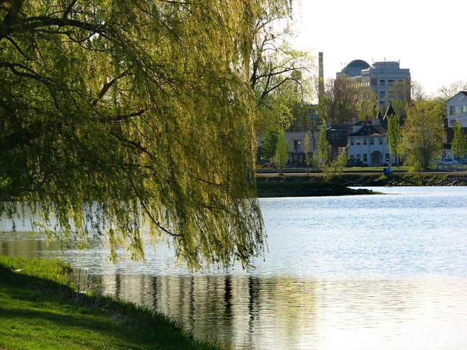 saule-pleureur-et-canal-en-ville.jpg